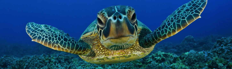 Pesci tartarughe acquario riccione for Lago tartarughe